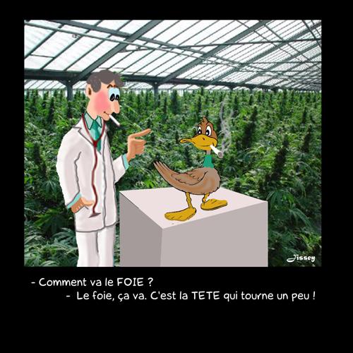 464 Canards au cannabis 500