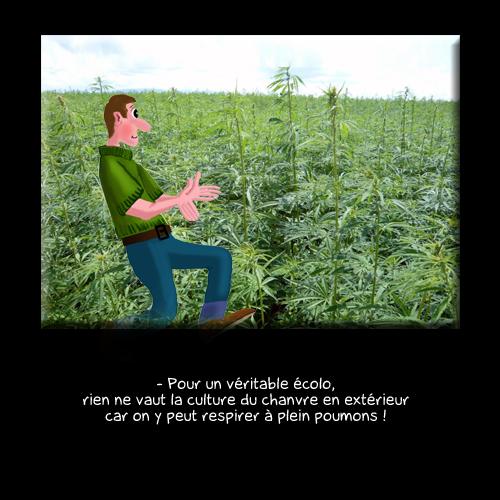 573 Cannabis no ecolo
